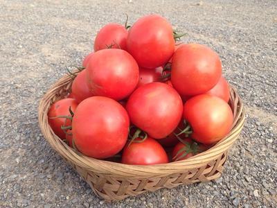 【绿手指】有机现摘番茄 包邮  2.5kg/箱(选自提默认包邮,只限该产品)